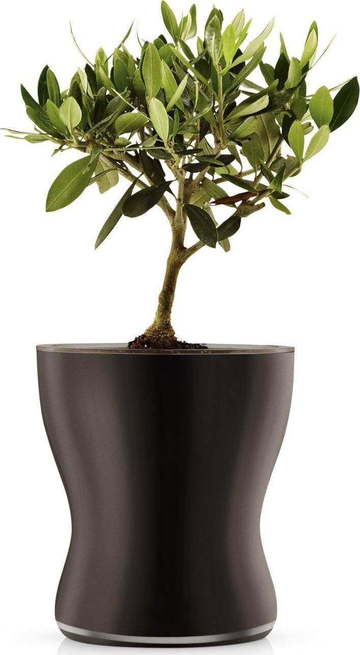Skleněný samozavlažovací květináč, černá