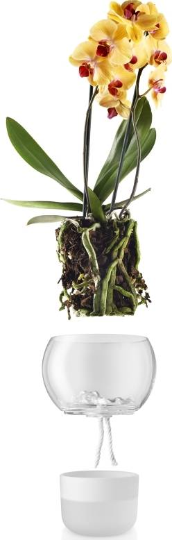 Eva Solo Skleněný samozavlažovací květináč na orchideje 15 cm
