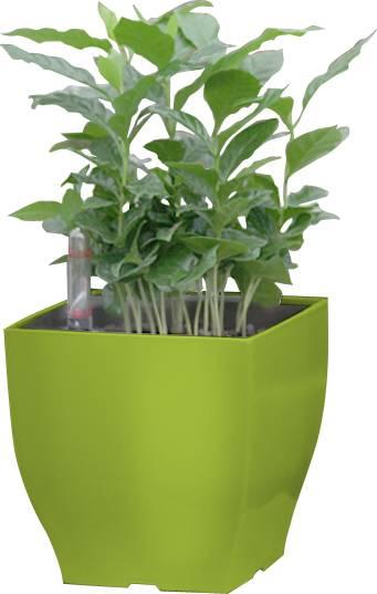 Samozavlažovací květináč Cube mini zelený 13.5 cm 6392575 G21