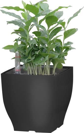 Samozavlažovací květináč Cube mini černý 13.5 cm 6392573 G21